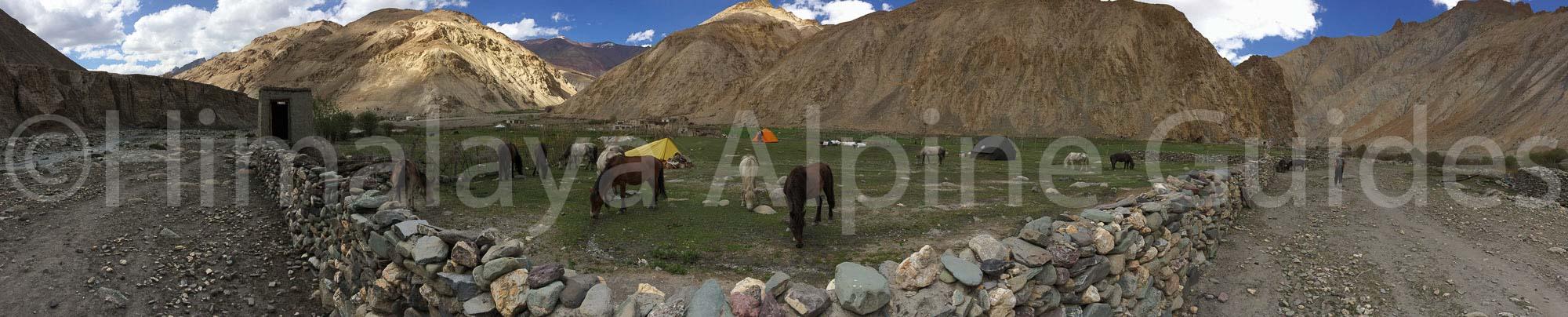 hangkar-camp-horses