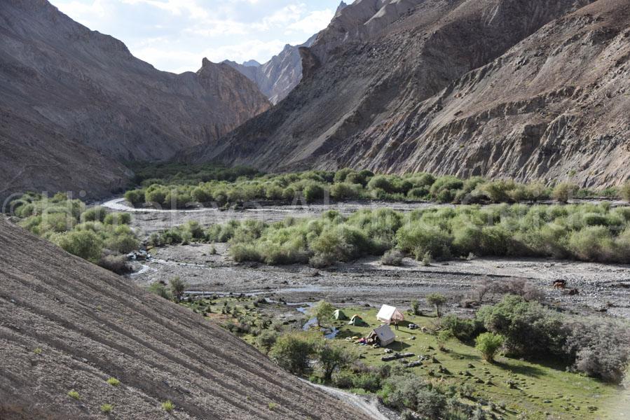 ladakh-trek-markha-camp